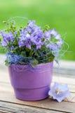Little bell flower Stock Photos