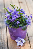 Little bell flower Stock Photo