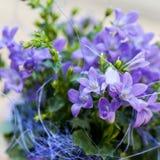 Little bell flower Royalty Free Stock Photo