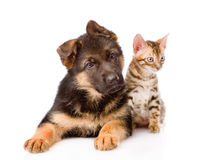 Little bengal cat and german shepherd puppy dog lying together. isolated Stock Photo