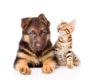 Little bengal cat and german shepherd puppy dog lying together. Royalty Free Stock Photos