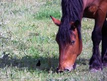 The little and the big - horse and bird. In a field Royalty Free Stock Images