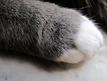 Little big paw Royalty Free Stock Photos