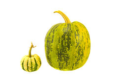Little and big pumpkins isolated on white Royalty Free Stock Photography