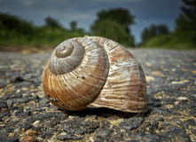 Little Big World. Snail shells lying on deserted road Royalty Free Stock Image