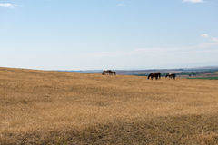 Little Bighorn Montana Stock Images