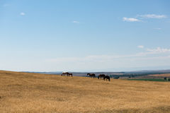 Little Bighorn Montana Stock Images