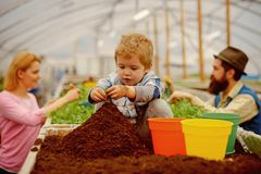 Little biologist. little biologist work with soil. little biologist in greenhouse. little biologist child planting royalty free stock photography