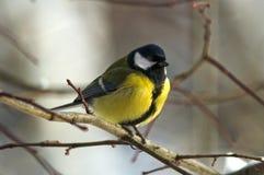 Little bird Stock Photos