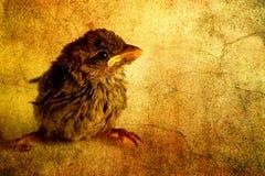Free Little Bird Stock Image - 3190761