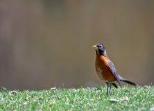 Little bird Royalty Free Stock Image