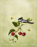 Little bird Stock Photography