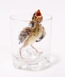 Little bird. Captured in glass pot Stock Photography