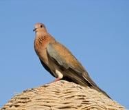 Little bird. A little bird looking at me Stock Photography