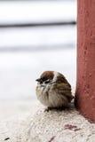 Little bird Royalty Free Stock Photo