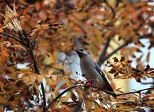 A little bird animal baby background beak Stock Images