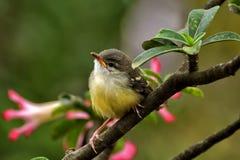 Little bird Stock Image