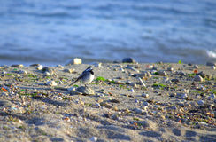 Little bird on a beach Royalty Free Stock Photo