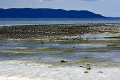 Little bird beach sky in  madagascar Stock Photo