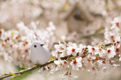 Little bird and Birdhouse in Spring with blossom cherry flower s Stock Photo