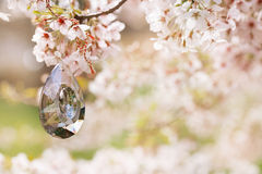 Little bird and Birdhouse in Spring with blossom cherry flower s Royalty Free Stock Photos
