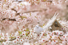 Little bird and Birdhouse in Spring with blossom cherry flower s Stock Image