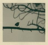 Little Bird Blown. A little bird sitting on a tree branch with the breeze blowing from behind him. Print on Kozo paper Stock Images