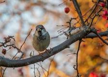 Little bird on a branch in the garden a winter morning stock photo