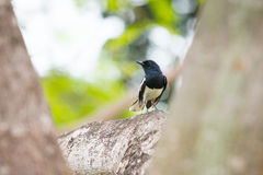 Little bird on branch Royalty Free Stock Photos