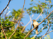 A little bird is on a branch. Stock Images