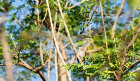 A little bird is on a branch. A small bird is on a branch. With green leaves around Stock Photos