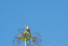 A little bird is on a branch. Royalty Free Stock Photography