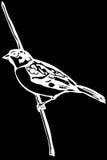 Little bird on a branch sparrow Stock Photos