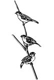 Little bird on a branch sparrow Stock Photography