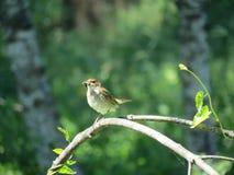Little bird Stock Images