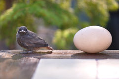 Little bird and egg Royalty Free Stock Photo