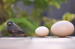Little bird and eggs Royalty Free Stock Image