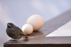 Little bird and eggs Royalty Free Stock Photo