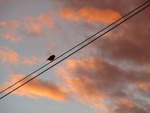 Little bird on the electric wires Stock Image