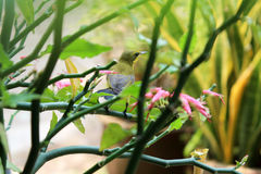 Little bird. On the flower Stock Photography