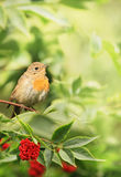 Little bird in the foliage Stock Image
