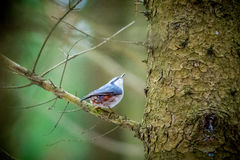 Little bird in forest. On a tree royalty free stock image