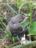 Little bird in the grass royalty free stock photo