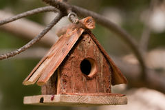 Little bird house on the branch of the pine tree Stock Image