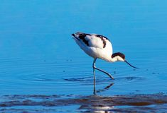 little bird  in the lake on the sunny day. Namibia stock photo