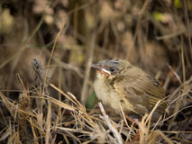 The little bird on the land. Royalty Free Stock Image