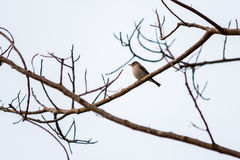 A little bird on the lifeless branches. A little bird on the lifeless tree's branches in the blue sky Royalty Free Stock Photos