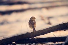Little bird. Little bírd on a branch royalty free stock photos