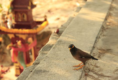 Little bird looking straight to camera. stock photos