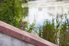 Little bird on nature with copy space as background for different art Royalty Free Stock Photos